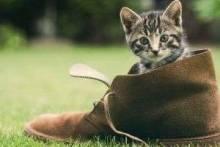 Как избавиться от запаха кошачьей мочи: проверенные народные средства