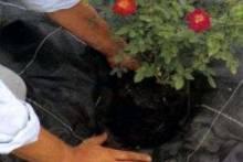 Плёнка в качестве защитника от болезней растений