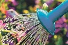 Как сберечь влагу в саду?