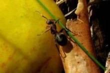 Как избавиться от муравьев на участке: советуют опытные садоводы
