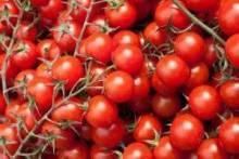 Выращивание помидоров черри в открытом грунте, в теплице и в домашних условиях