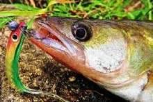 Весенний запрет на рыбалку и разрешенные способы ловли