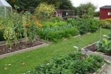 Что сажать на даче: удивите соседей свои урожаем