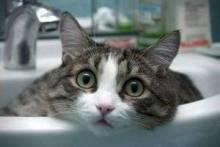 Почему кошки боятся воды? У них есть на то веские причины!