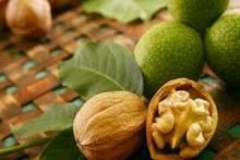 Выращивание грецких и земляных орехов в средней полосе, в Подмосковье