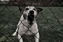 Самые опасные собаки в мире: неожиданный хит-парад псов-убийц