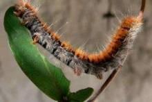 Как защитить сад от насекомых без химии?