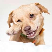 Эвтаназия животных: как происходит?