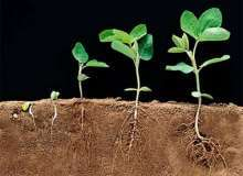 Чем стимулировать рост растения?