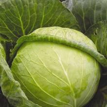 Как дольше сохранить капусту?