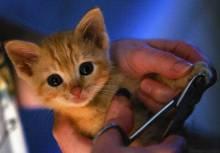 Как правильно стричь когти кошке?