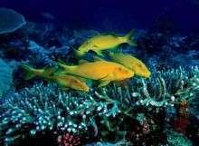Новая Каледония: достопримечательности и самый красивый Барьерный риф