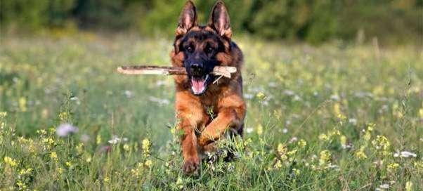 Как убрать неприятный запах изо рта у собаки