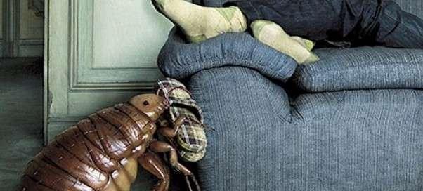 Как избавиться от постельных клопов самостоятельно