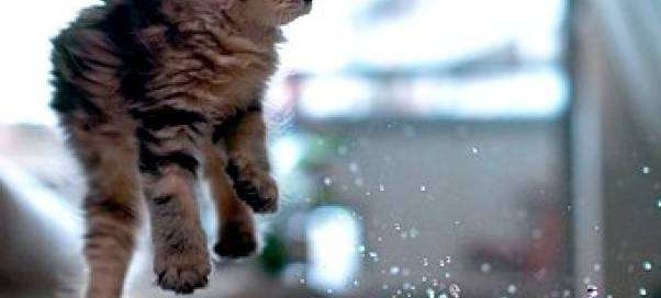 Почему котенок не ест, а только пьет воду