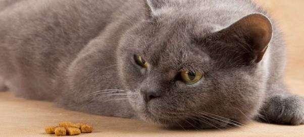 Взрослый кот не ест и не пьет, какие могут быть причины?
